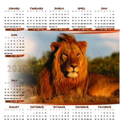 lion-a2