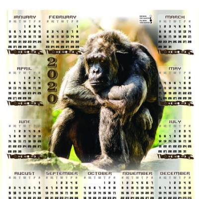 chimp-a3