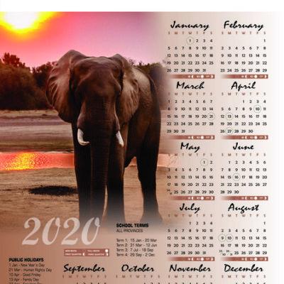 elephant-a2